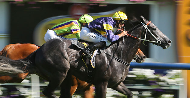 Caulfield Callout's – Caulfield Family Day Races Preview
