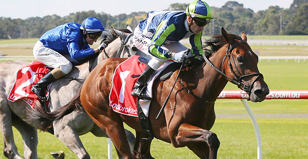 Unbeaten Caulfield trained colt Merchant Navy returns on Saturday