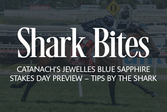Shark Bites: Catanach's Jeweller's Blue Sapphire Stakes Day Preview