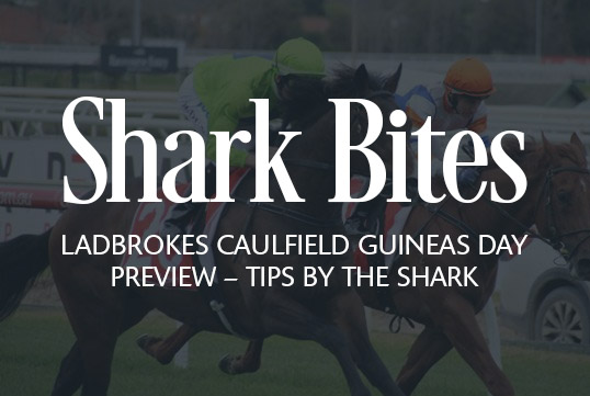 Shark Bites: Ladbrokes Caulfield Guineas Day Preview